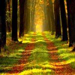 Waldgebiet der Schorfheide