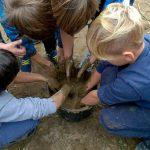 Kooperationsprojekt mit dem landwirtschtlichen Betrieb SAG